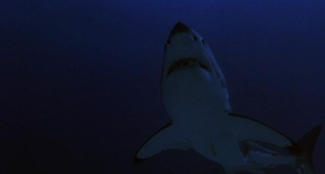 Wütende Haie in RAGING SHARKS